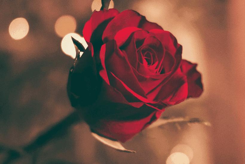 How to Make Valentine's Day Special |kimschob.com